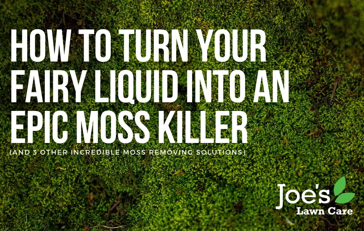 How To Turn Your Fairy Liquid Into An Epic Moss Killer Joe S