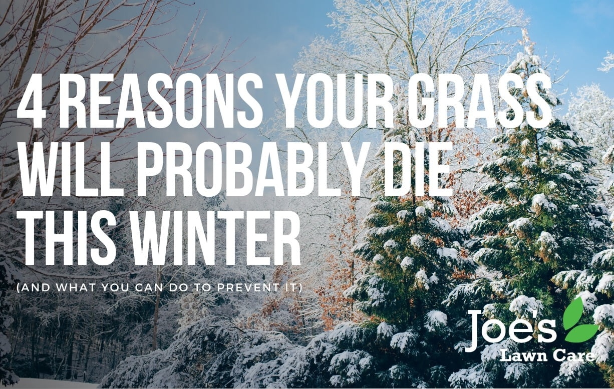 4 reasons your grass will probably die this winter