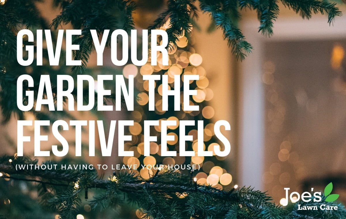 give your garden the festive feels