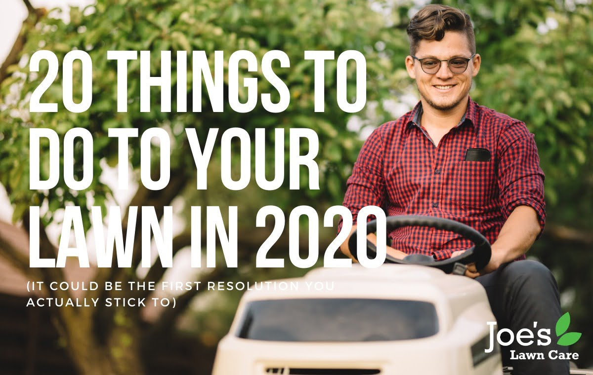 20 things to do to your lawn in 2020