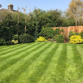 Nice Looking Lawn With Plants