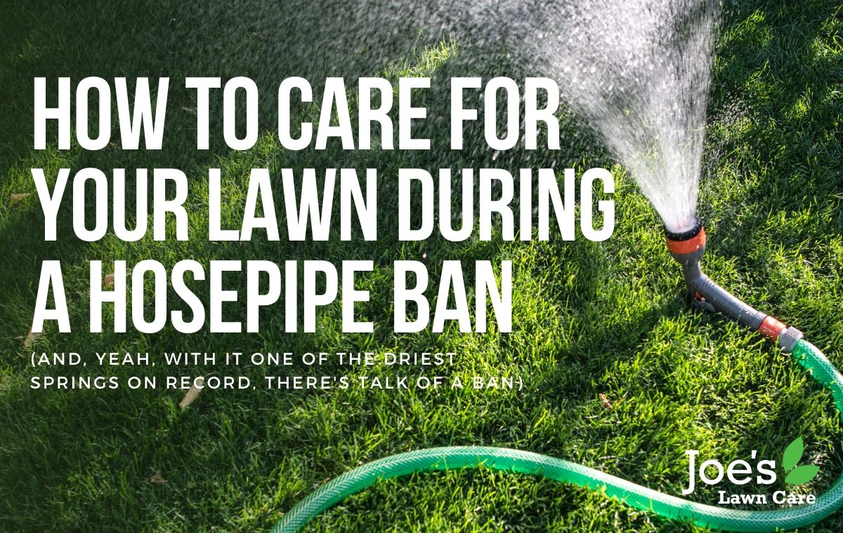 how to care for your lawn during a hosepipe ban