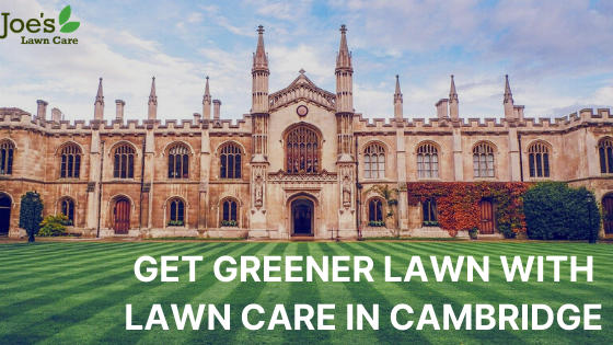 GET GREENER LAWN WITH LAWN CARE IN CAMBRIDGE