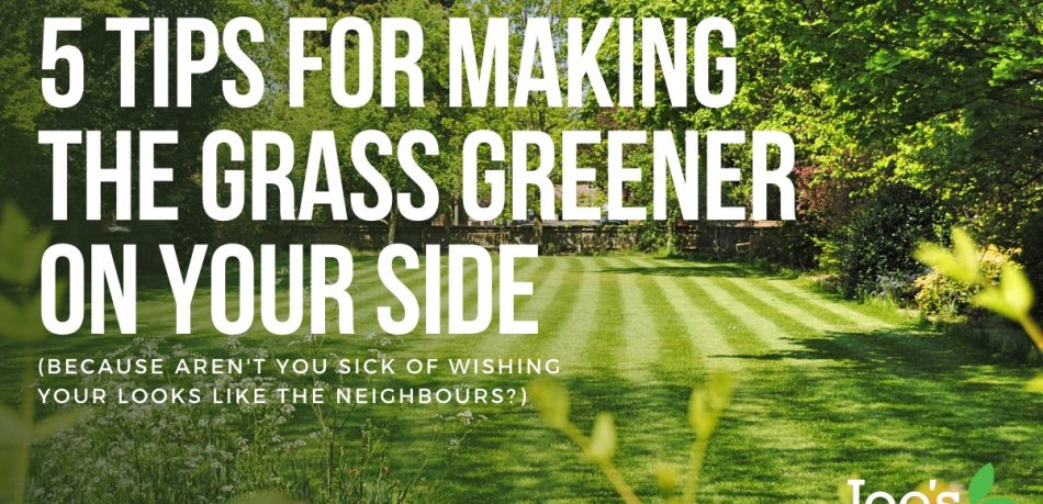 5 tips for making grass greener