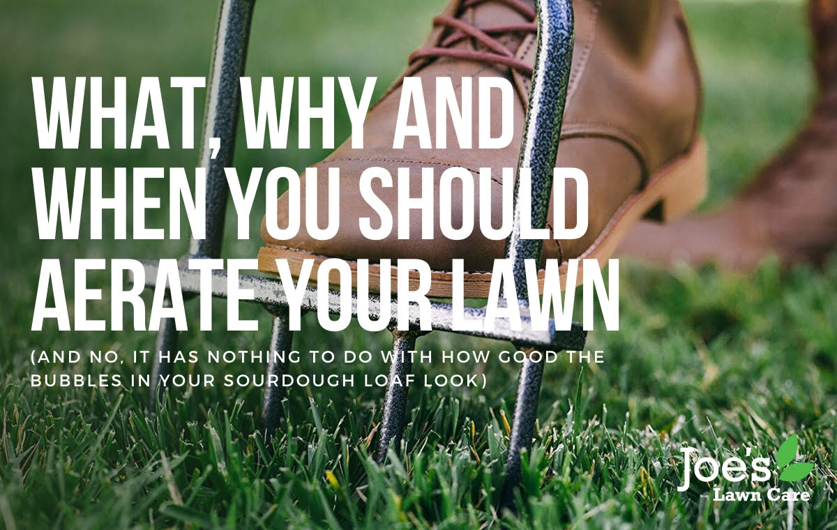 what why and when you should aerate you lawn