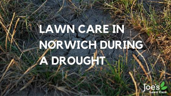 Lawn Care in Norwich During a Drought