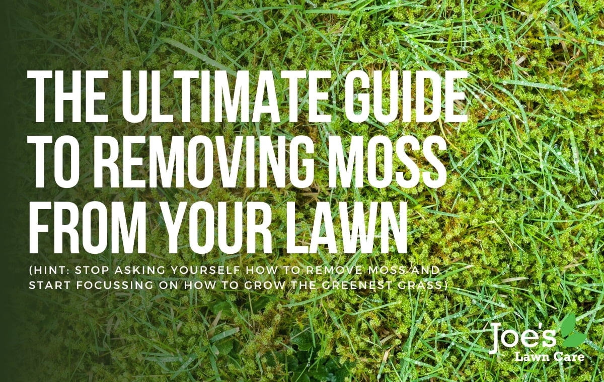 The ultimate guide to removing moss from your lawn