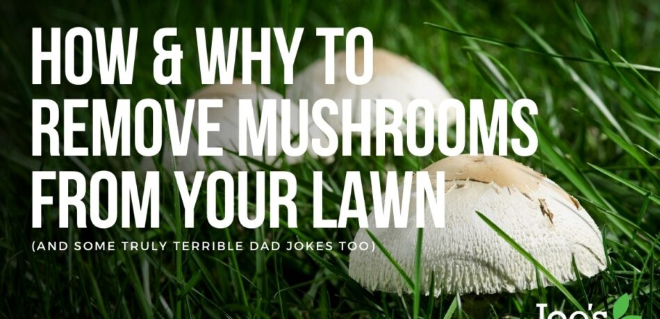 Featured image funghi