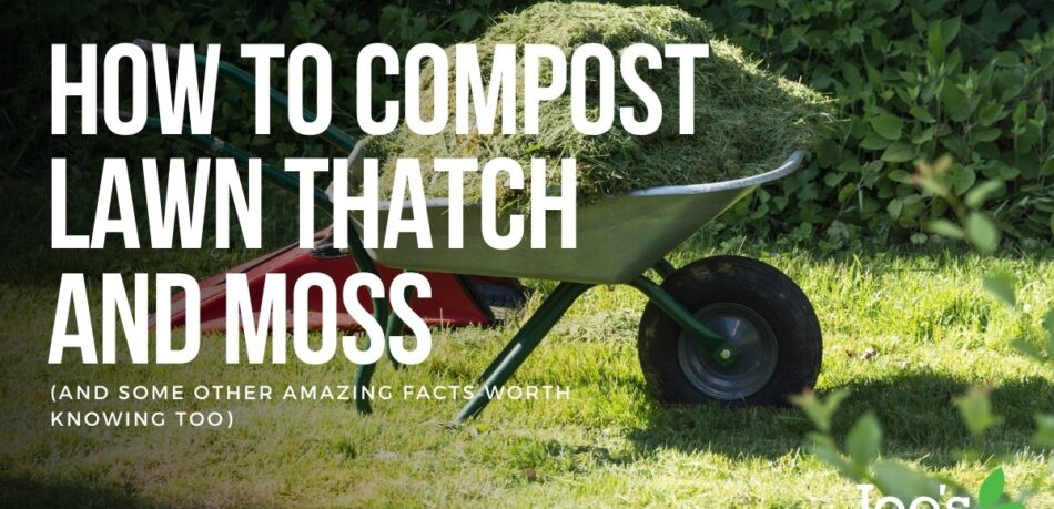 How to compost lawn thatch and moss