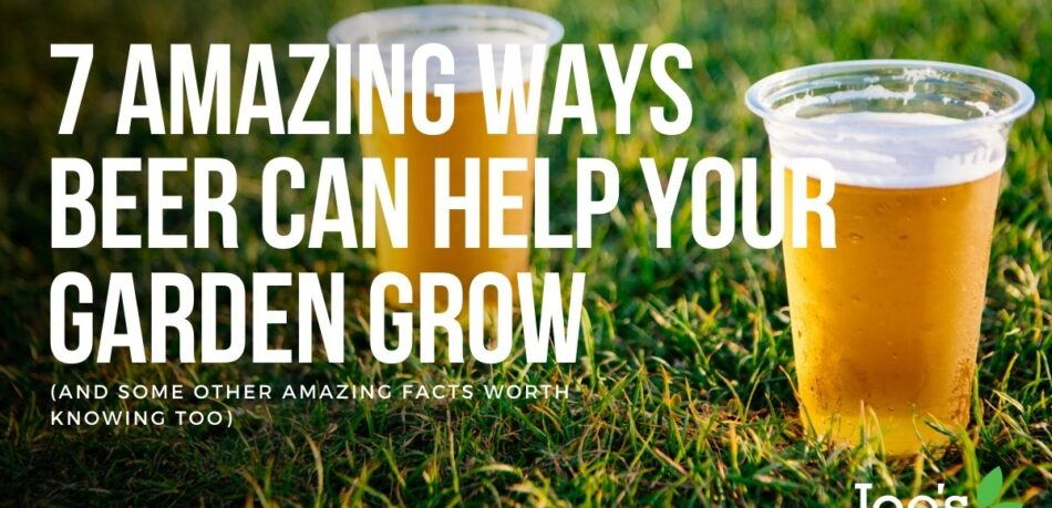 & amazing ways beer can help your garden grow