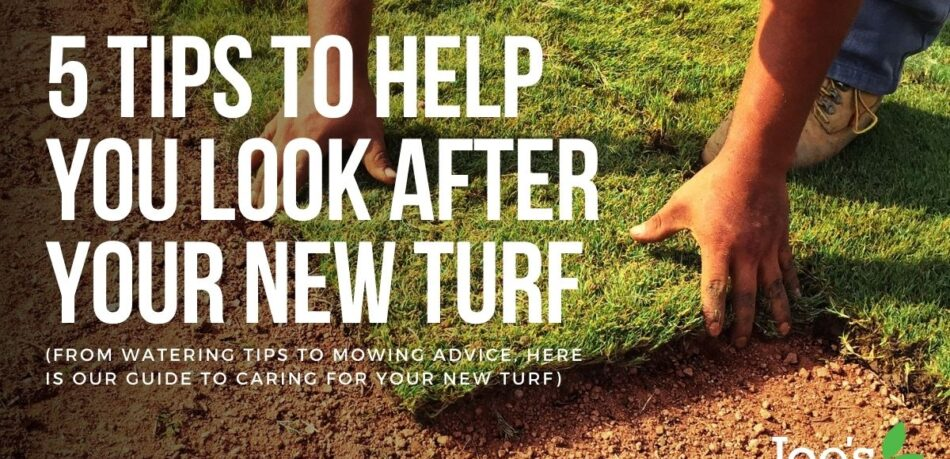5 Tips To Help You Look After Your New turf