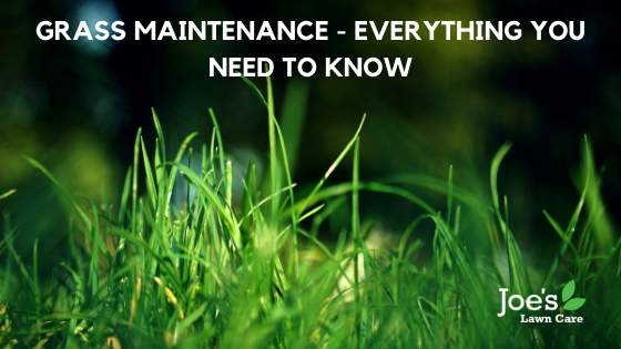 Grass Maintenance - Everything You Need To Know