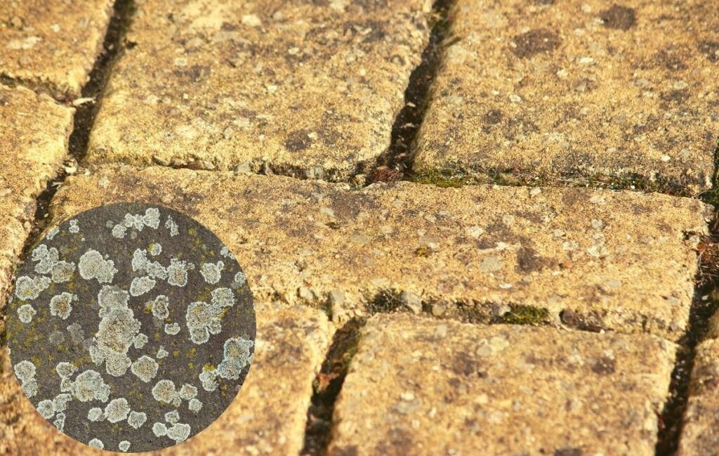 lichens - common hard surface problems
